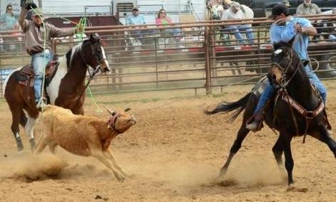 Sunday Stills challenge cows