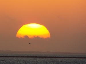 A lone Pelican fies into the sunset.