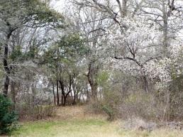 Spring flowers in February